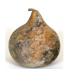 Gourd Washing Information