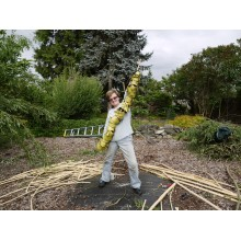 Discover and Play - Willow Bark Workshops with Judy Zugish